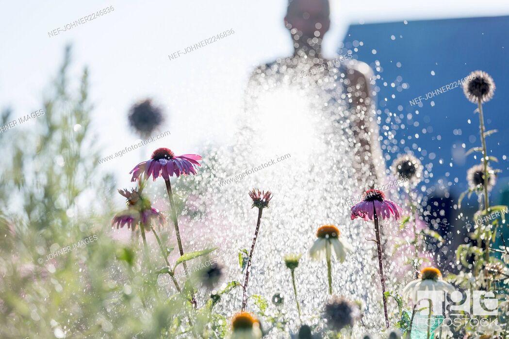 Imagen: man watering flowers in garden.