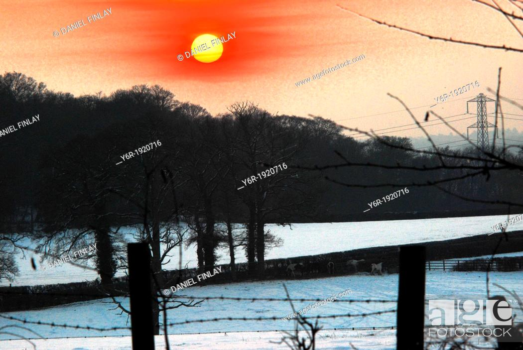 Stock Photo: Mad Bess Wood and electricity pylons, near Ruislip in north-west London, England, seen on a snowy Winter day at sunset.