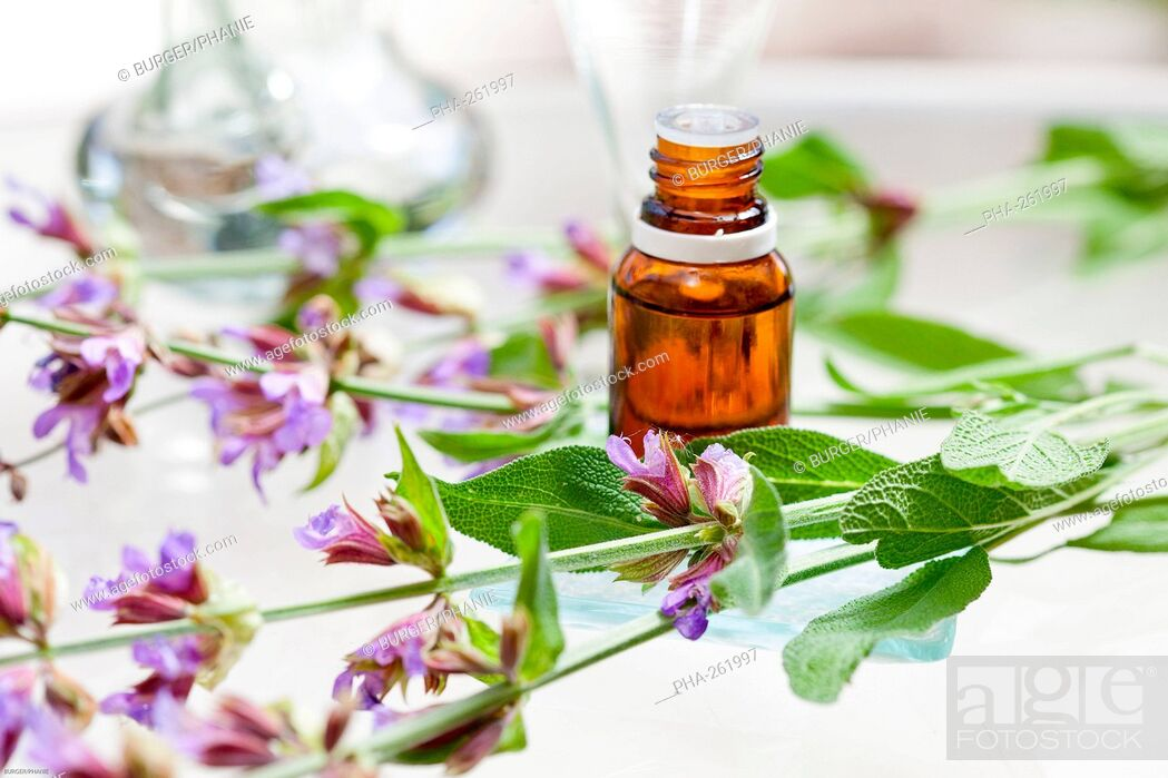 Stock Photo: Clary sage essential oil.
