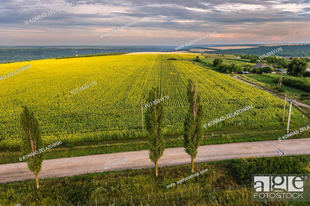 Stock Photo: Aerial view on a road and sunflower fields in Saharna Noua village, Rezina District of Moldova.