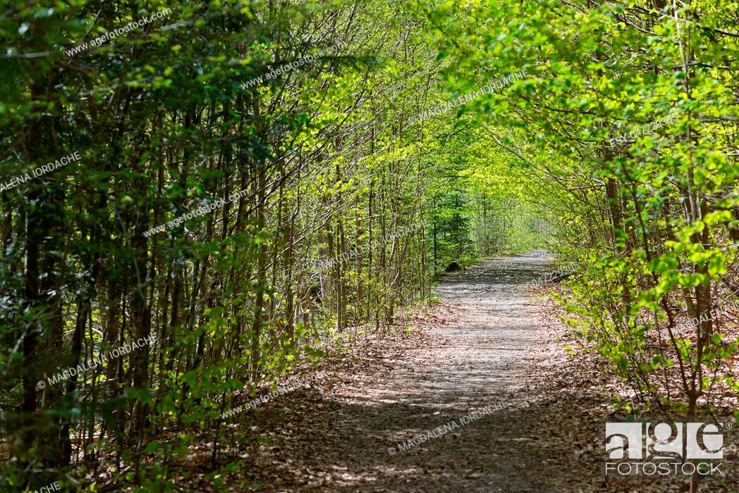 Stock Photo: Path deep forest in spring time.