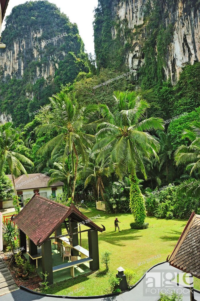 Stock Photo: coconut palms, Cocos nucifera, in garden of P. N. Mountain Resort, Ao Luk, Krabi, Thailand.
