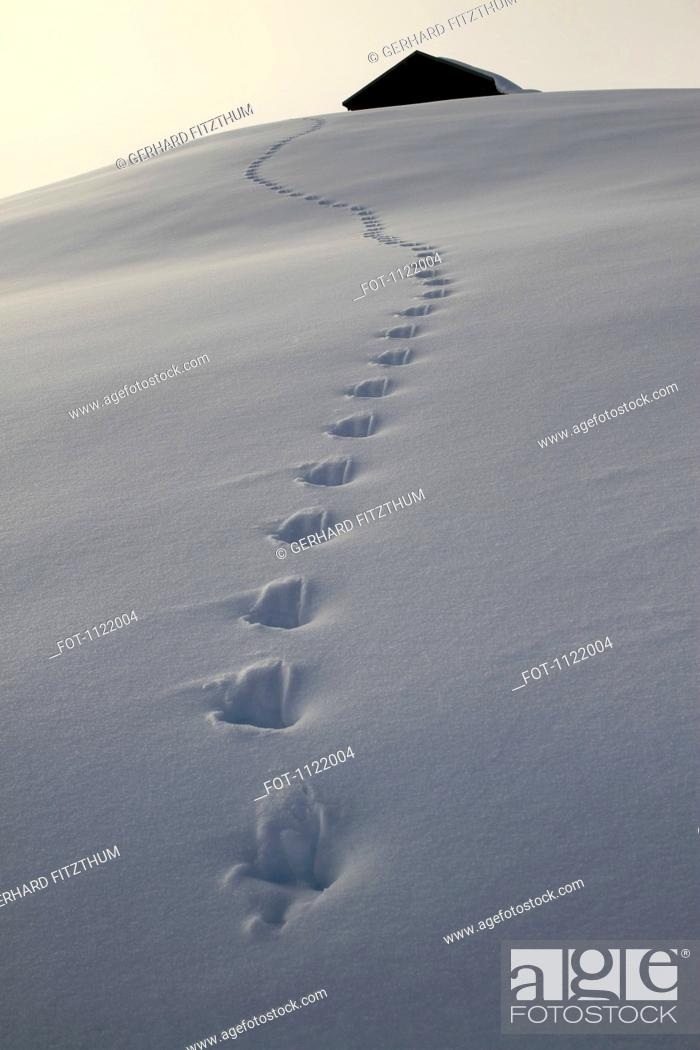 Stock Photo: Footprints leading up to cabin.
