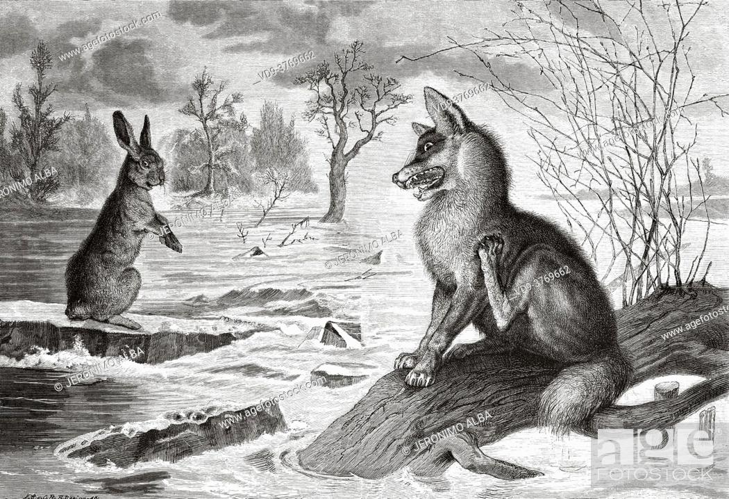 Stock Photo: The fox looking at the hare in a river. Old 19th century engraved illustration from El Mundo Ilustrado 1879.