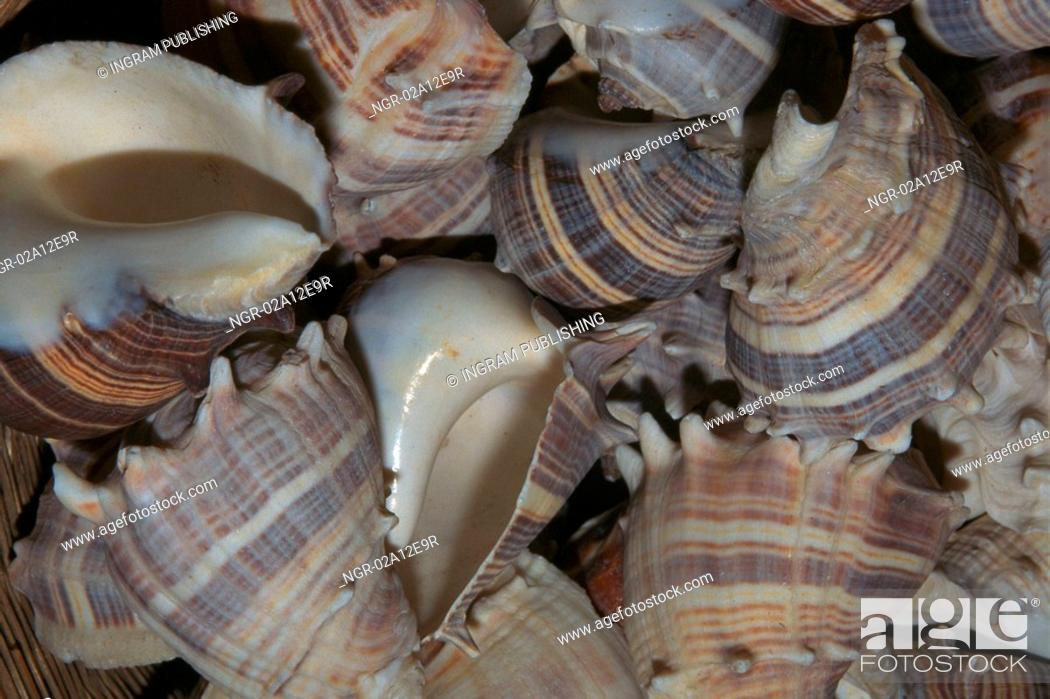 Stock Photo: Close-up of a pile of seashells.