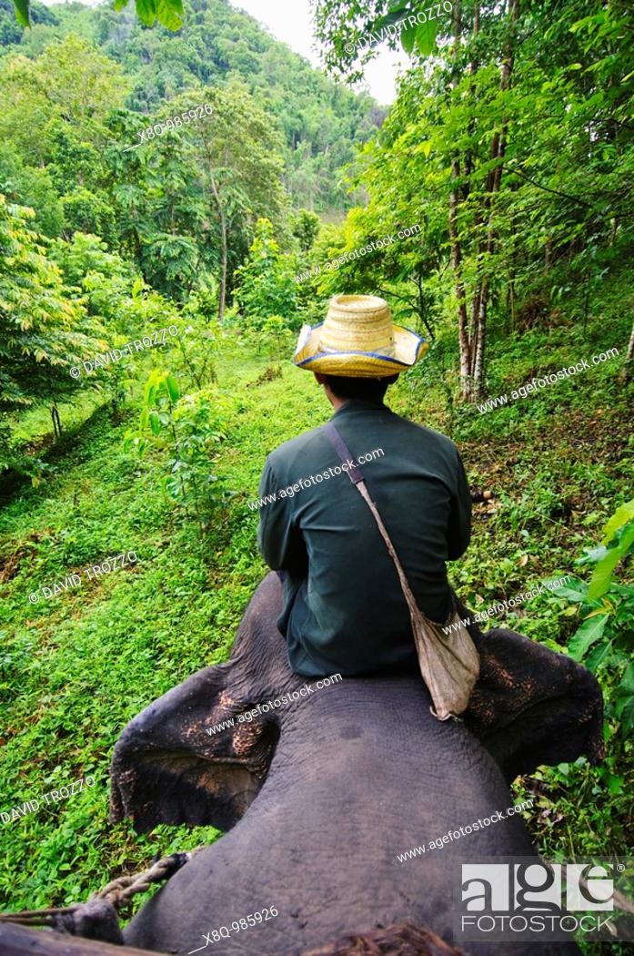 Stock Photo: Elephant handler, Kanchanaburi Province, Thailand.