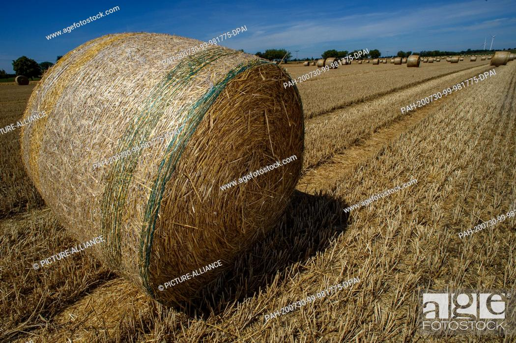 Stock Photo: 30 July 2020, Saxony-Anhalt, Schleibnitz: Bales of straw lie on a harvested grain field. Midsummer has arrived in the country.