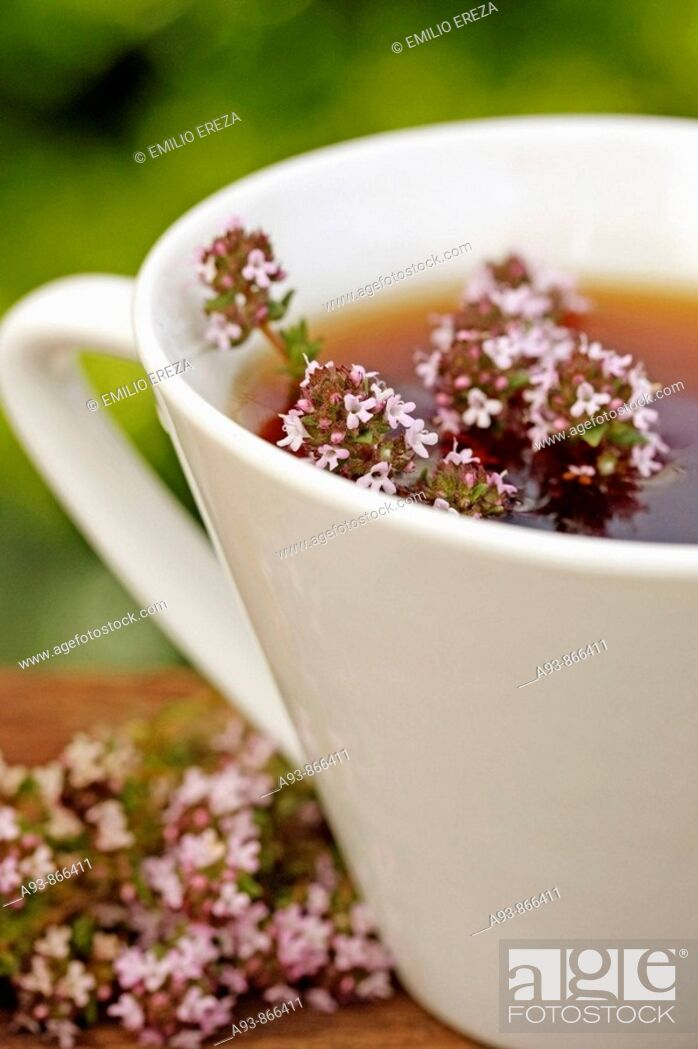 Stock Photo: Thyme infusion (Thymus vulgaris).