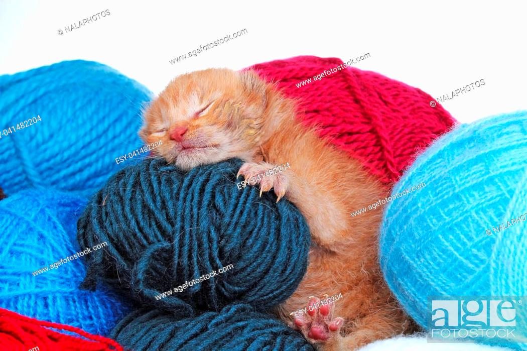 New Born Baby Cat Sleeping Cute Beautiful Little Few Days Old Orange Cream Color Kitten Stock Photo Picture And Low Budget Royalty Free Image Pic Esy 041482204 Agefotostock