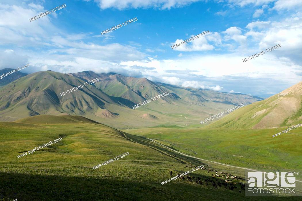 Stock Photo: Kyrgyzstan, Naryn Province, flock of sheeps grazing in the Tölök valley leading to Song-Kol lake state zoological reserve.