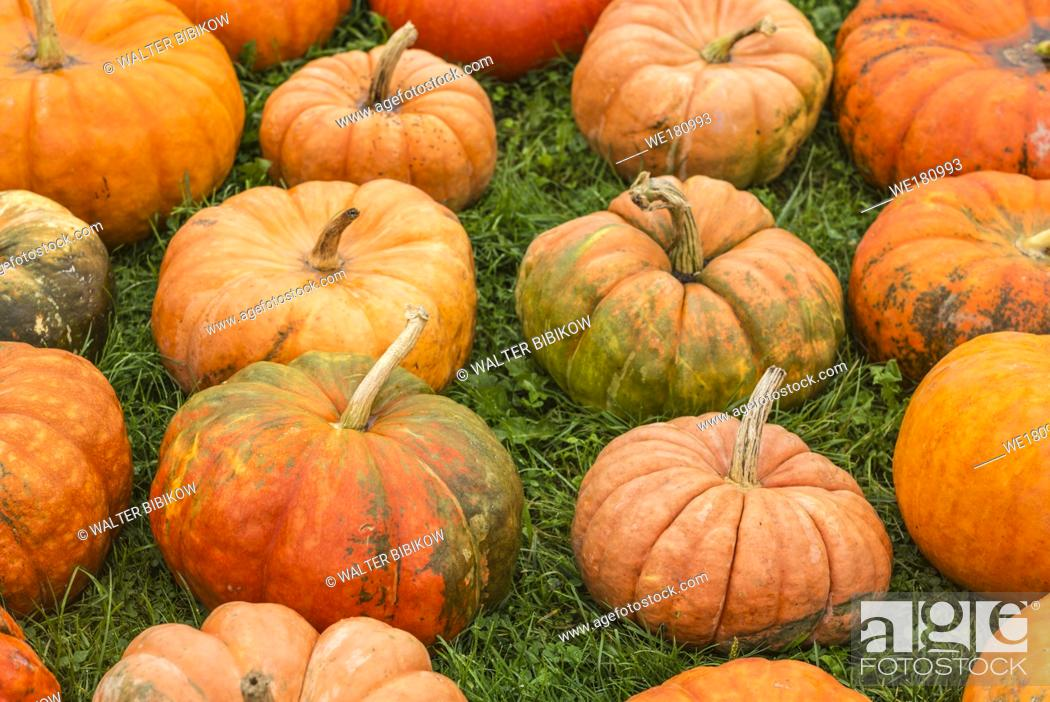 Stock Photo: USA, Maine, Wells, autumn pumpkins.