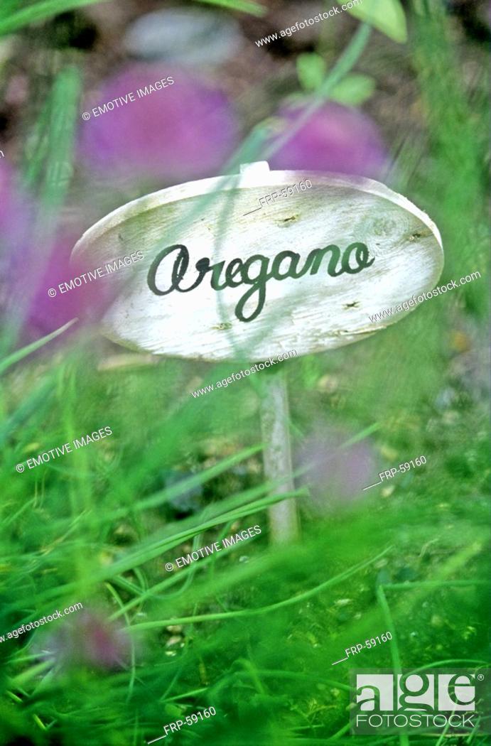 Stock Photo: Oregano.