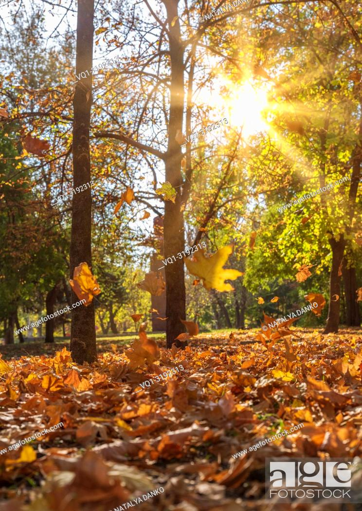 Imagen: autumn city park with trees and yellow leaves in the evening in the rays of the sun, Ukraine.