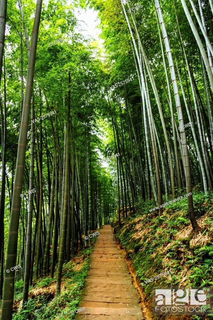Imagen: Yibin, Sichuan province, China - Beautiful view at Shunan Bamboo Sea national park.