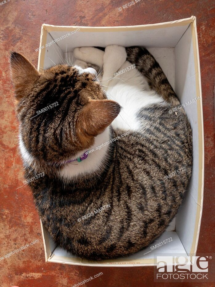 Stock Photo: Overview of a cat in a shoe box.