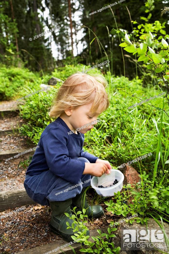 Stock Photo: A little boy eating blueberries, Sweden.