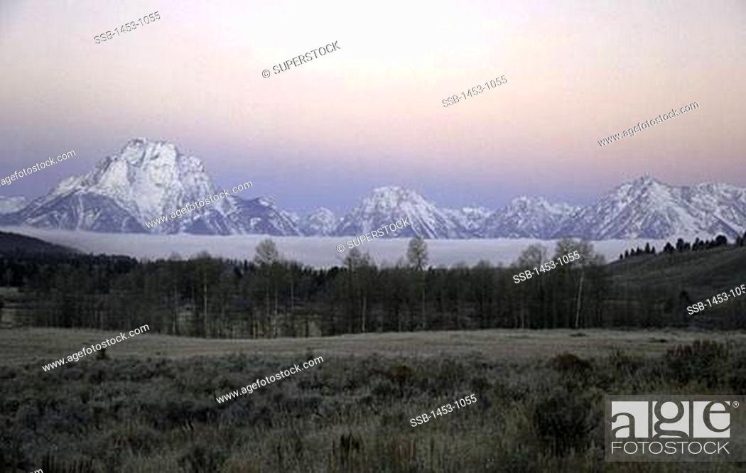 Stock Photo: Forest with mountains in the background, Teton Range, Grand Teton National Park, Wyoming, USA.