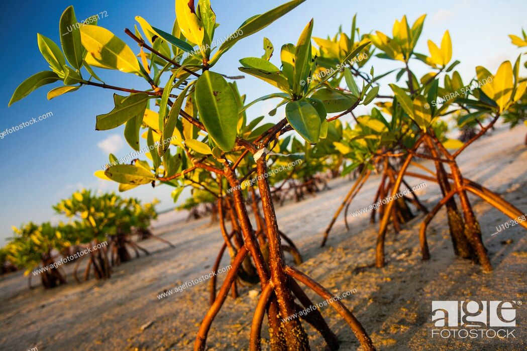 Stock Photo: Isla Blanca, Quintana Roo. México.