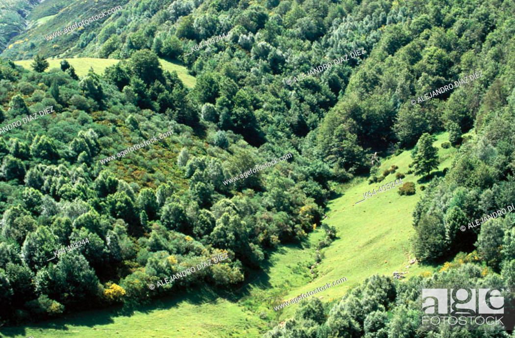 Stock Photo: Meadows and forest, San Glorio, Liébana. Cantabria, Spain.