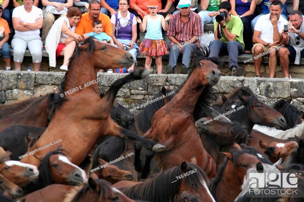 Imagen: Rapa das Bestas, Spanish tradition that involves cutting the manes of the horses. Sabucedo, Galicia, Spain.