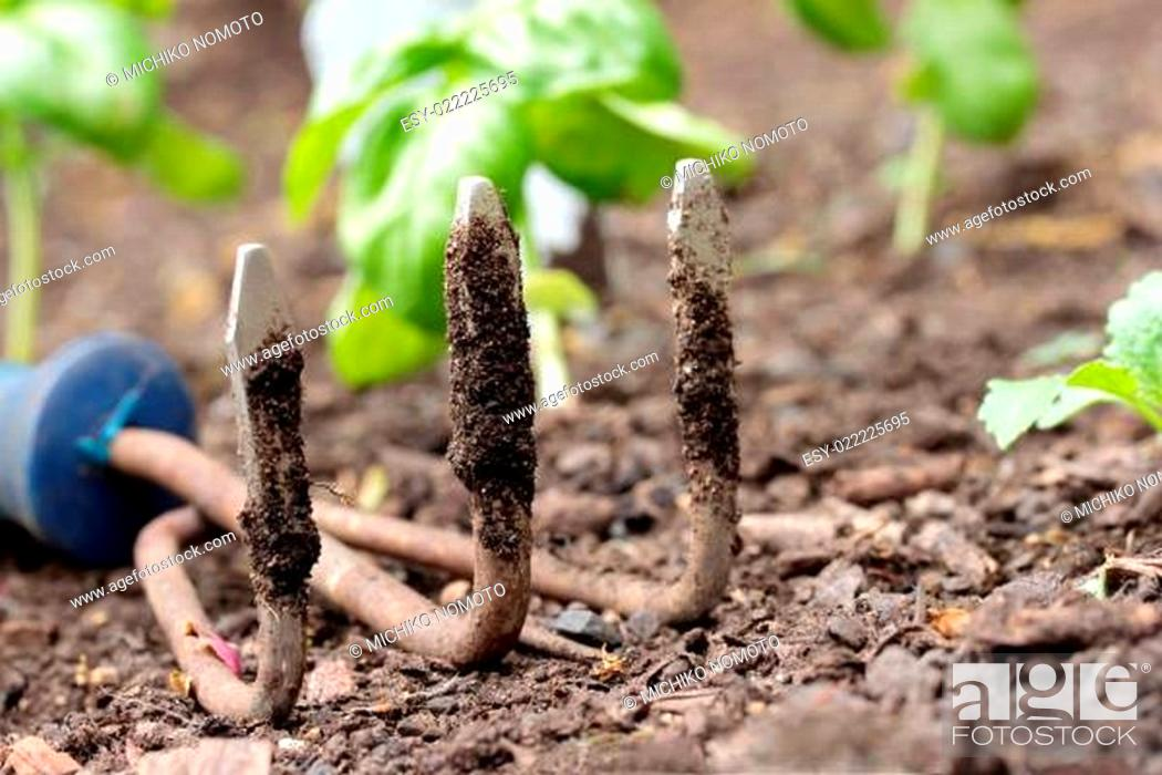 Stock Photo: Garden small rake.