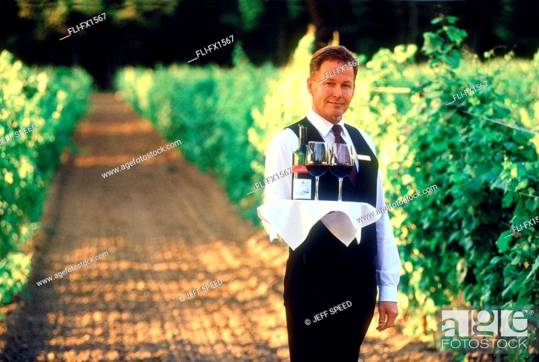 Stock Photo: Waiter in Vineyard, Niagara on the Lake, Ontario.