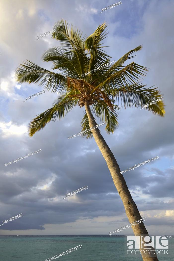 Stock Photo: Palm tree on the beach in Le Morne Brabant, Mauritius.