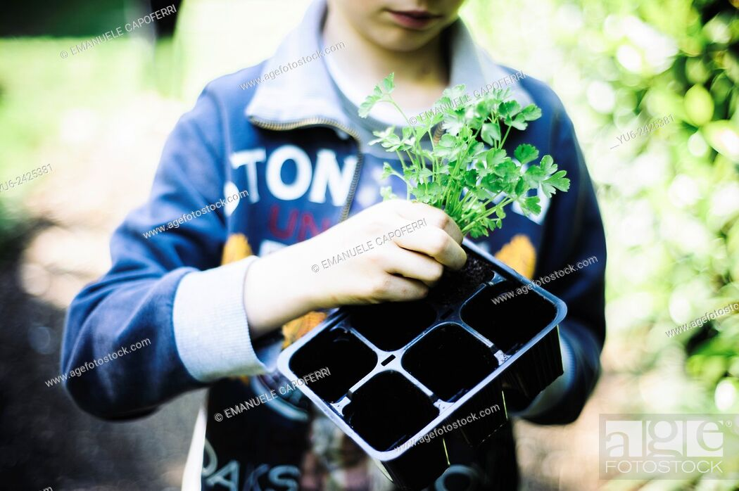 Stock Photo: Child with vegetable seedling in hand, preparation of the garden home.