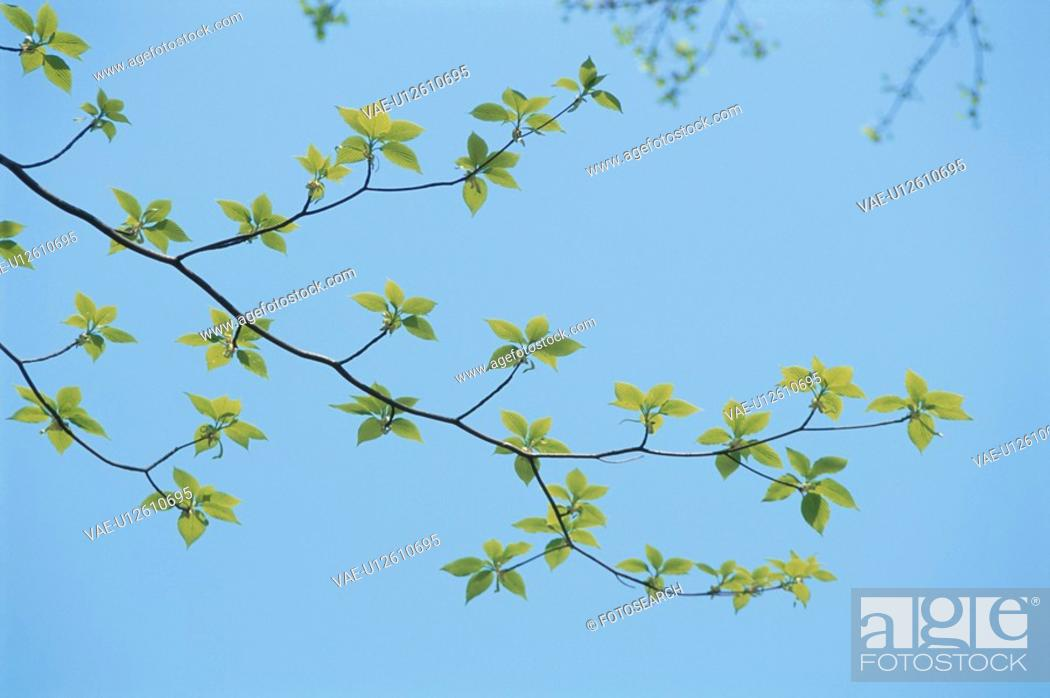 Stock Photo: Leaves And Blue Sky.