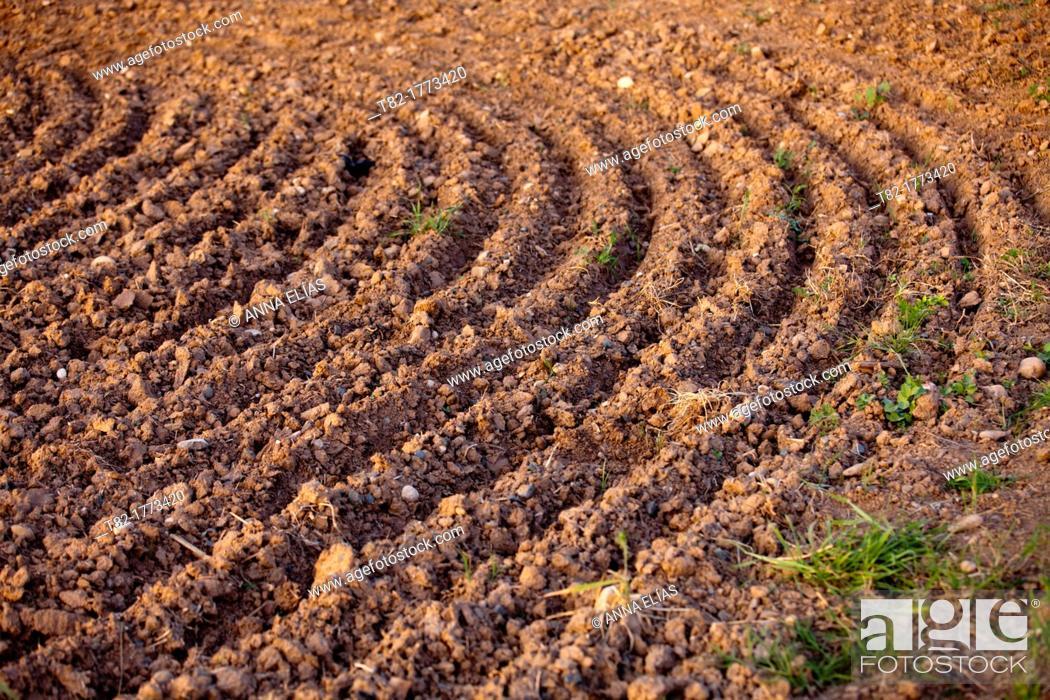 Stock Photo: farmland grooves simulating circular forms.