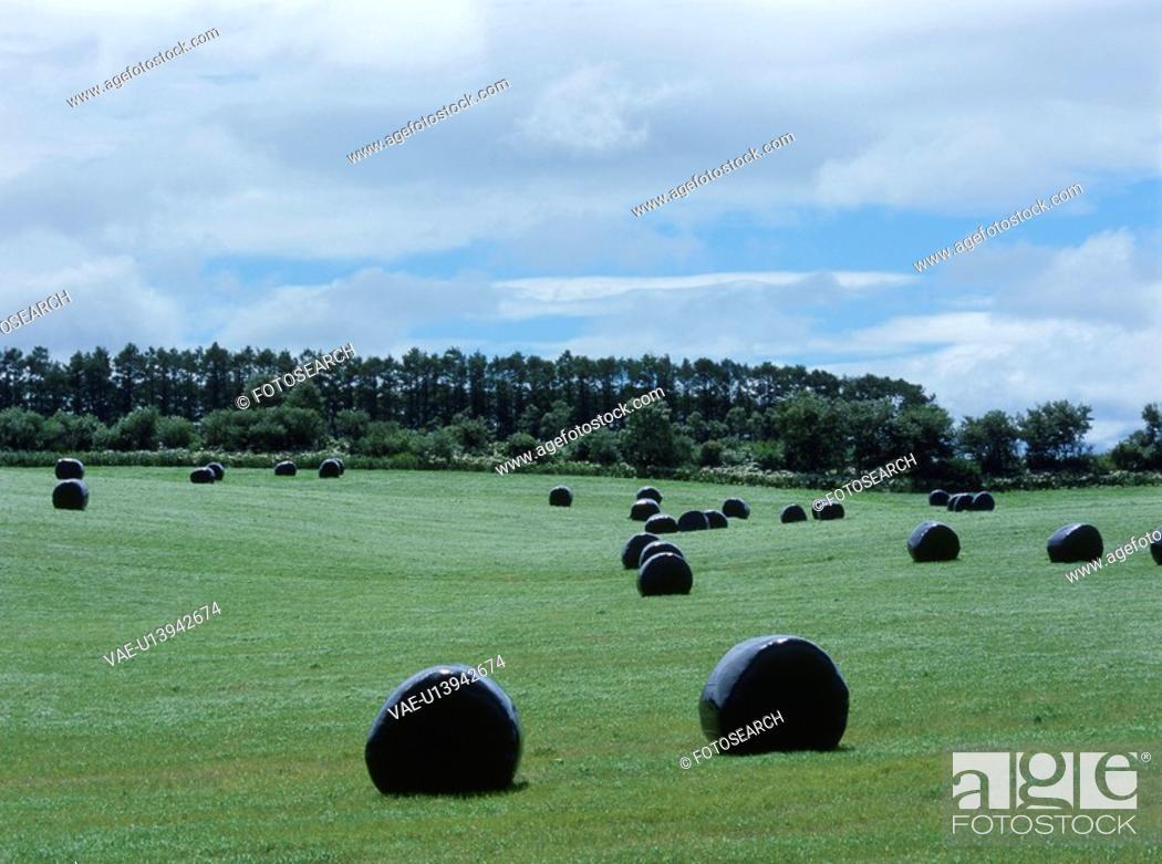 Stock Photo: Dried Grass.