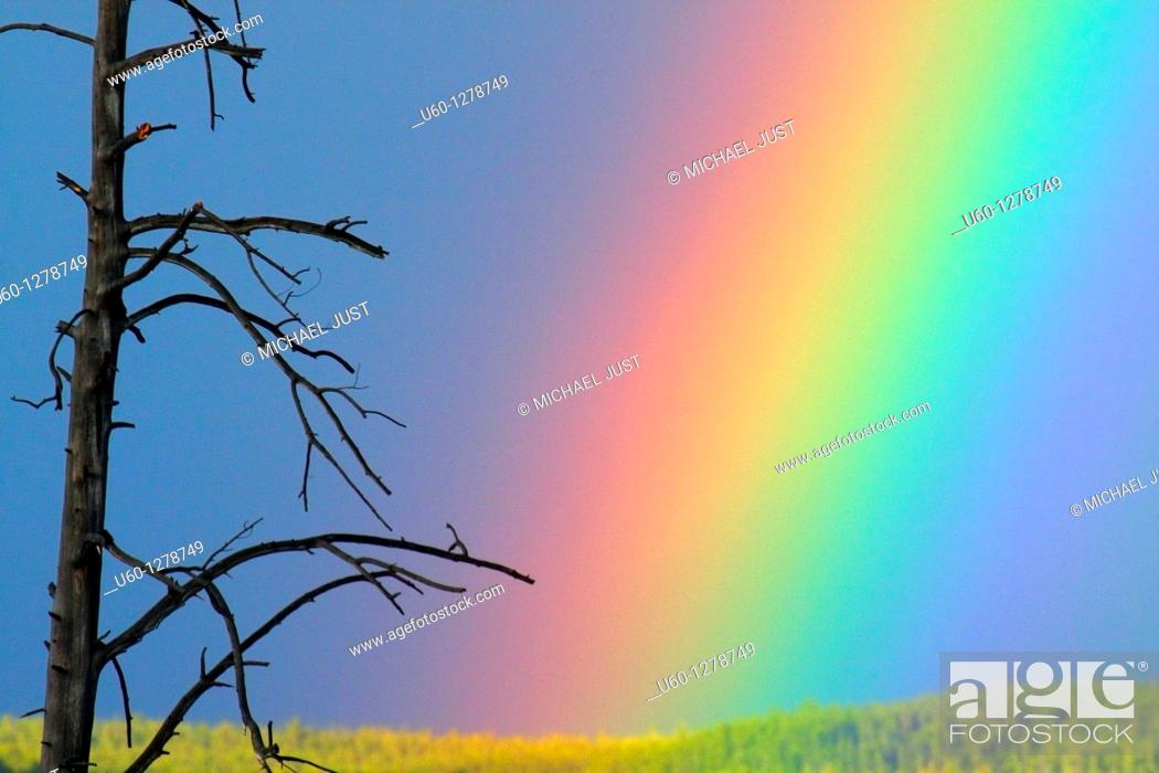 Stock Photo: A rainbow appears next to a dead tree after a rainstorm at Yellowstone National Park, Wyoming.