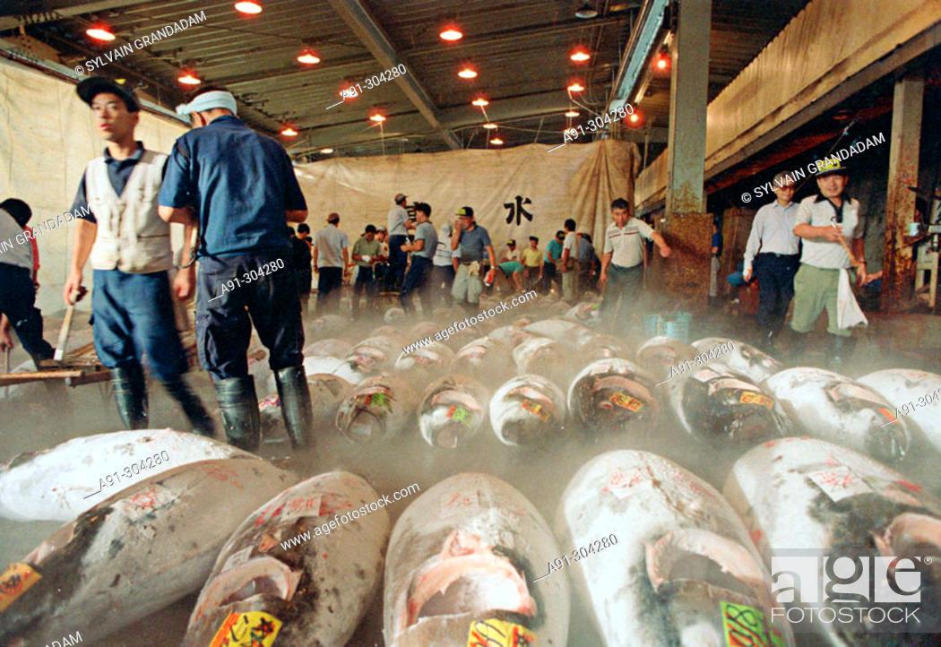 Photo de stock: Frozen tuna at Tsukiji morning wholesale fish market. Tokyo. Japan.