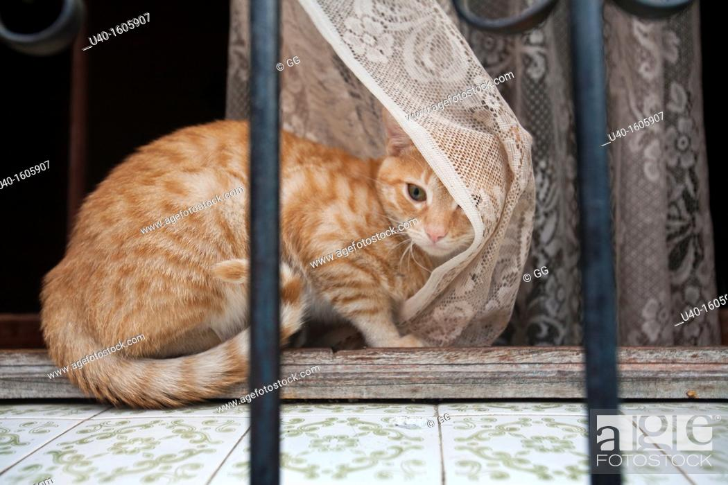 Stock Photo: Cat on a windowsill.