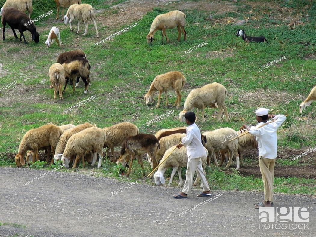 Imagen: Indian shepherd with flock of sheep.