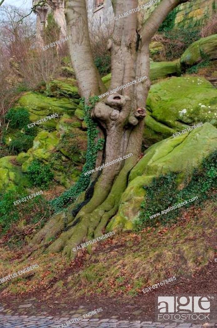 Stock Photo: tree trunk.