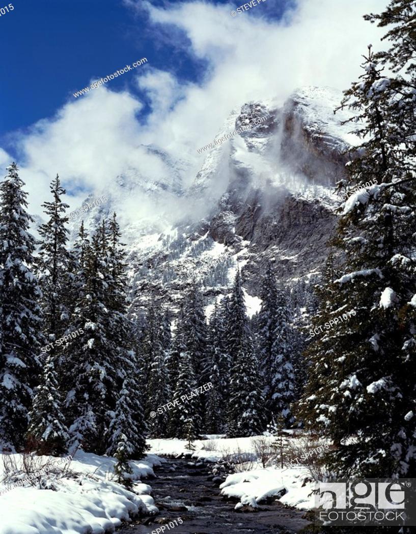 Stock Photo: Kane Creek flows beside snow covered evergreens in winter below cloud shrouded Devil's Bedstead Mountain, Pioneer Mtns, ID.
