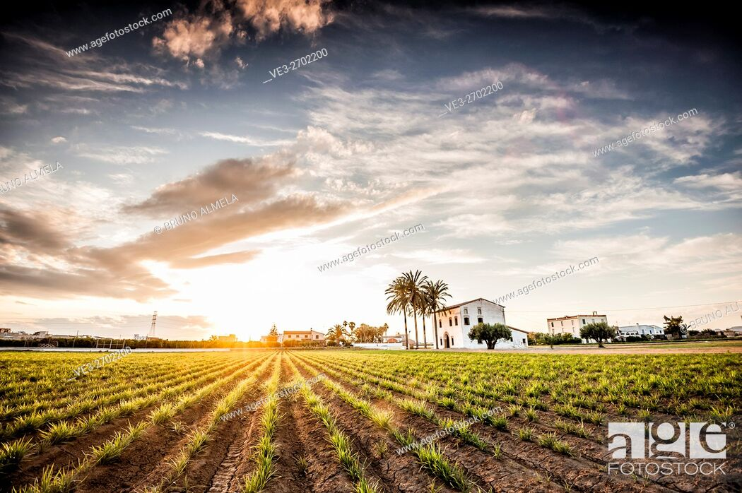 Imagen: Sunset over a tiger nut field with an Alqueria near Almassera (province of Valencia, Valencian Community, Spain). Alqueria is a traditional house of l'Horta.