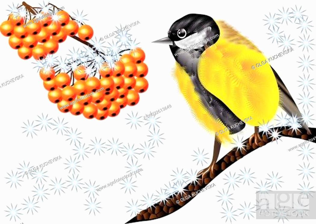Stock Vector: Bird and Winter Berries.