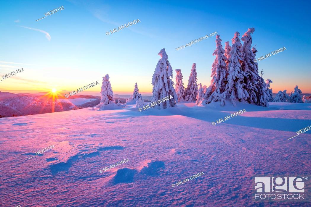 Stock Photo: Winter woodland in Mala Fatra mountain range, Slovakia.