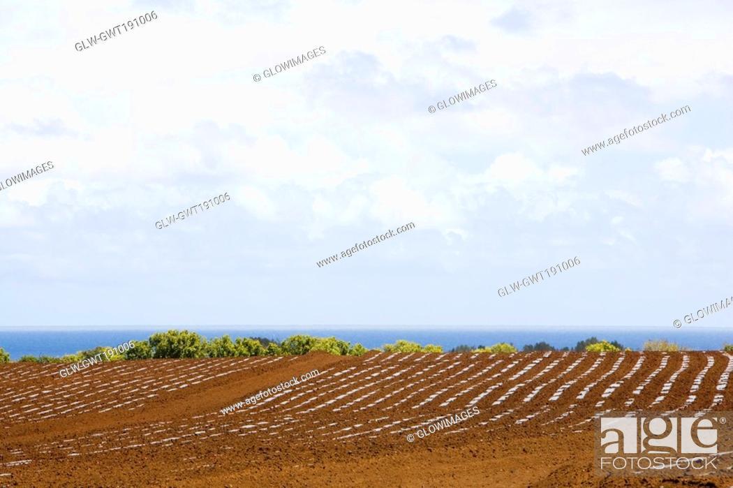 Stock Photo: Ploughed field at the seaside, Twin Falls, Maui, Hawaii Islands, USA.