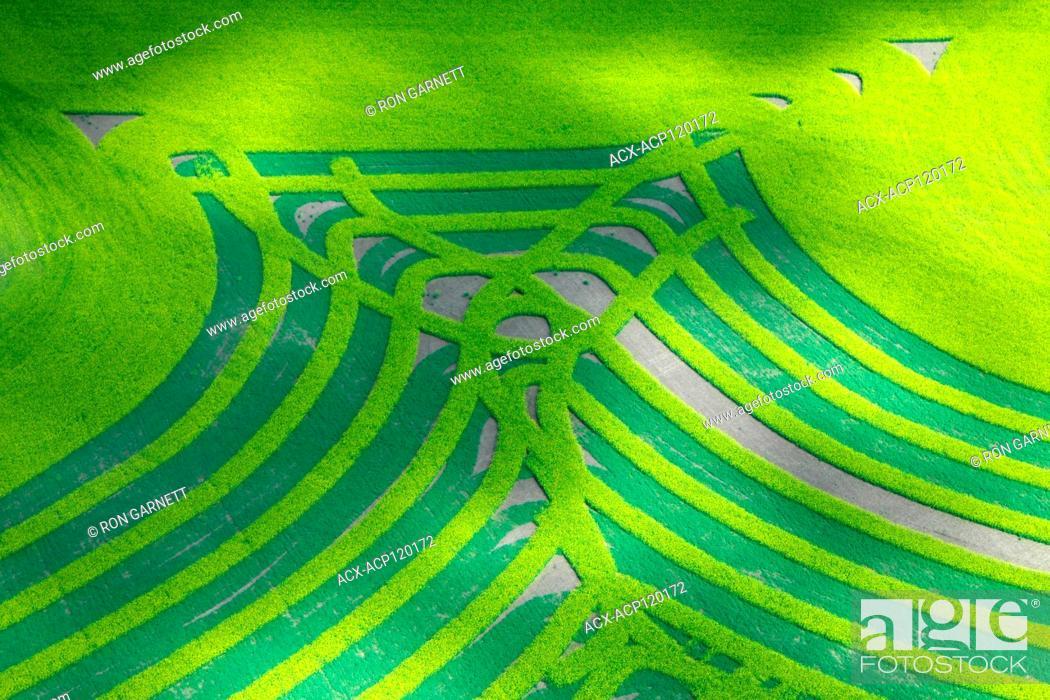 Stock Photo: aerial, canola 'crop art', Cutknife, Saskatchewan.