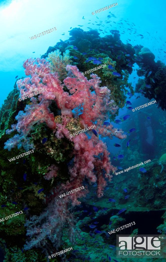 Stock Photo: Soft Coral Blooms On A Sunken Ship.