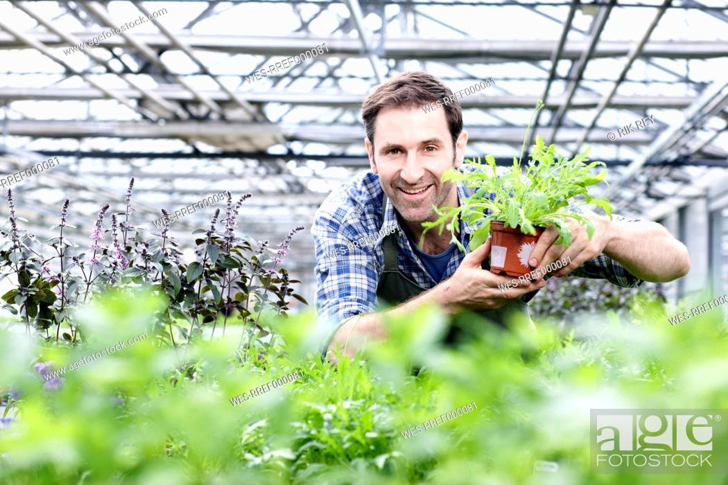 Stock Photo: Germany, Bavaria, Munich, Mature man in greenhouse with rocket plant.