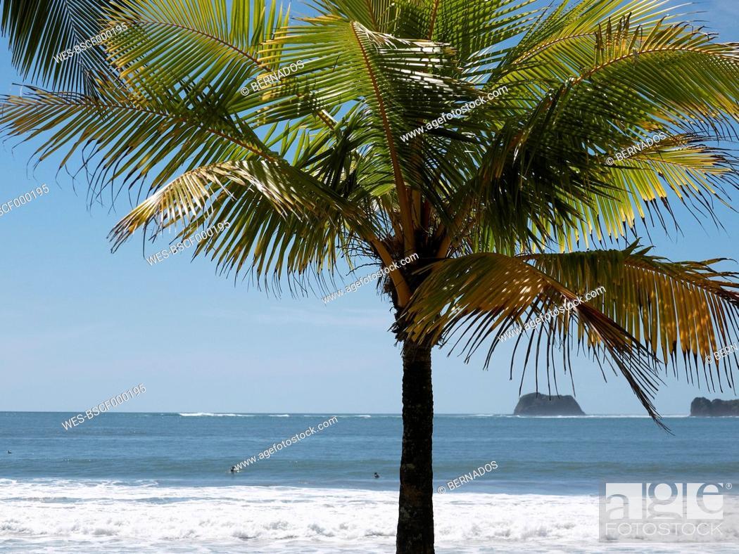 Stock Photo: Central America, Costa Rica, Palm tree on beach at Puerto Carrillo.