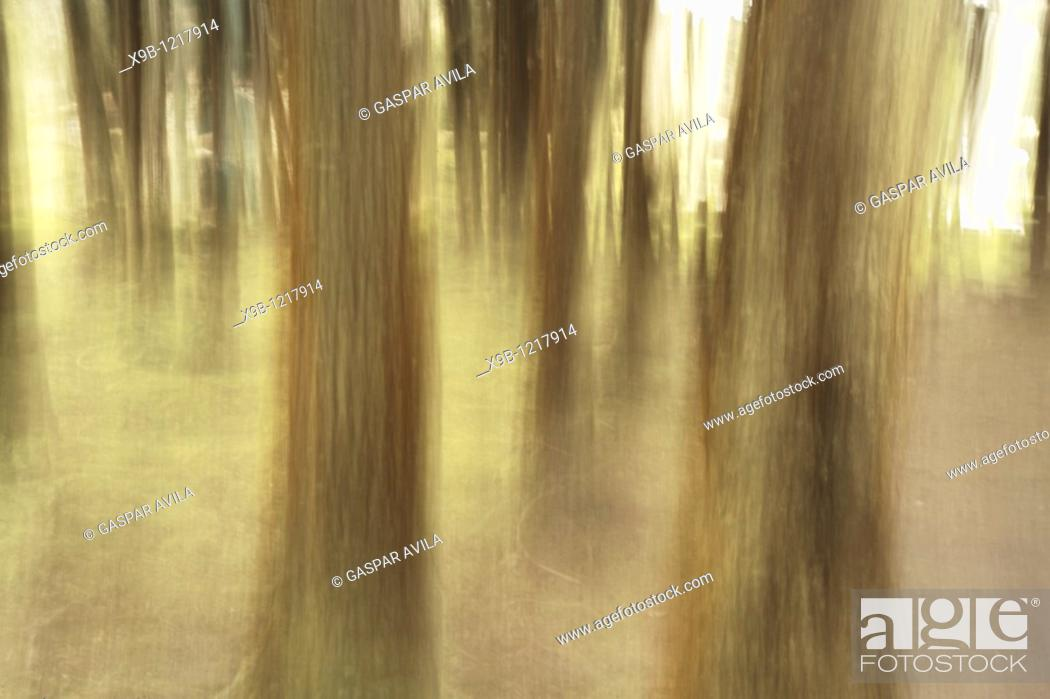 Stock Photo: Nature abstract.