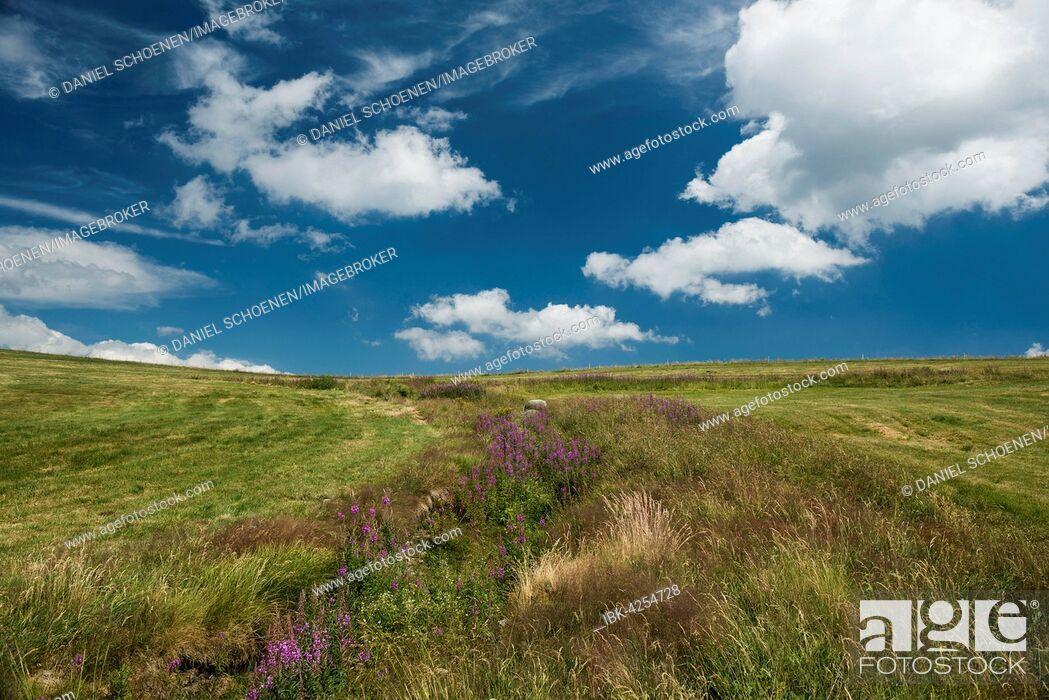 Imagen: Meadow on Grand Ballon, Great Belchen, Route des Crêtes, Vosges, France.