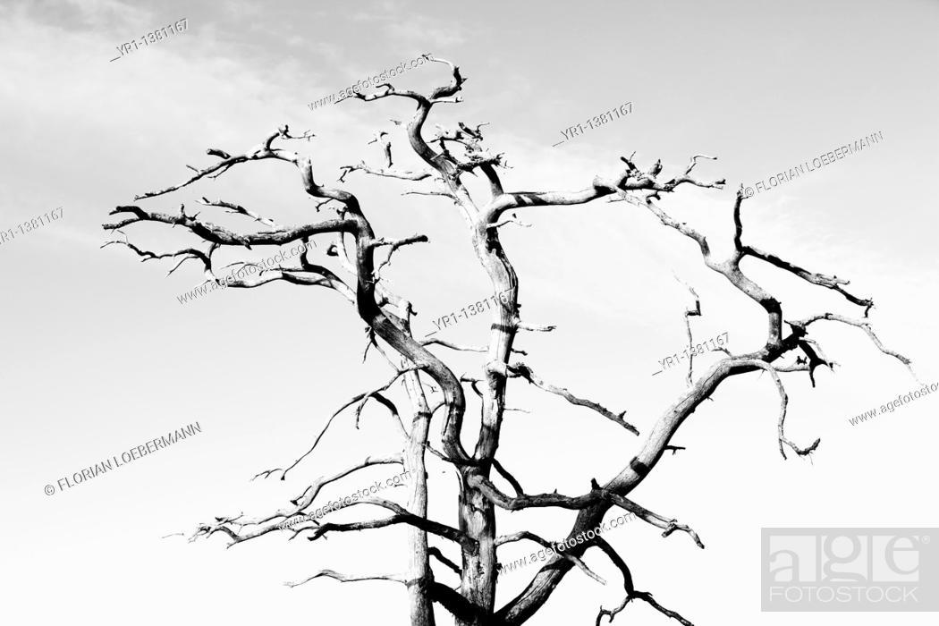 Stock Photo: Dead tree.