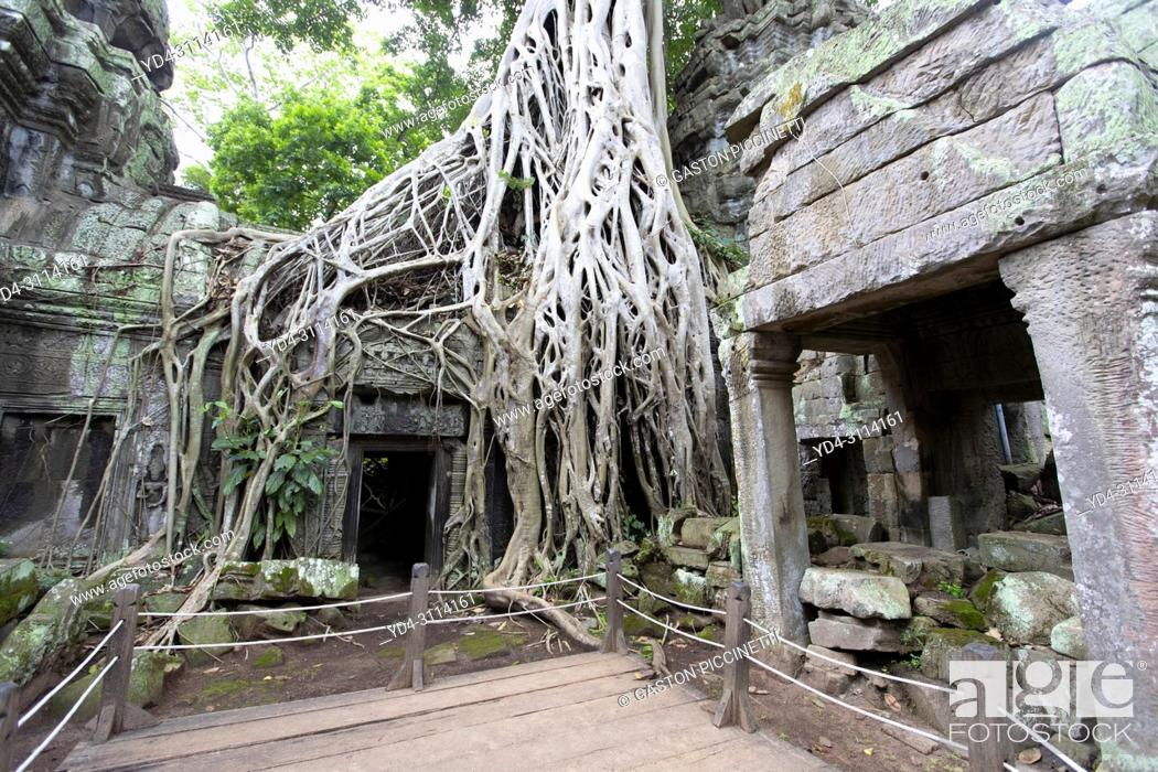 Imagen: Tree roots cover much of the ruins of Ta Prohm temple in Angkor Wat, Siem Reap, Cambodia. Ta Prohm is the modern name of the temple at Angkor.