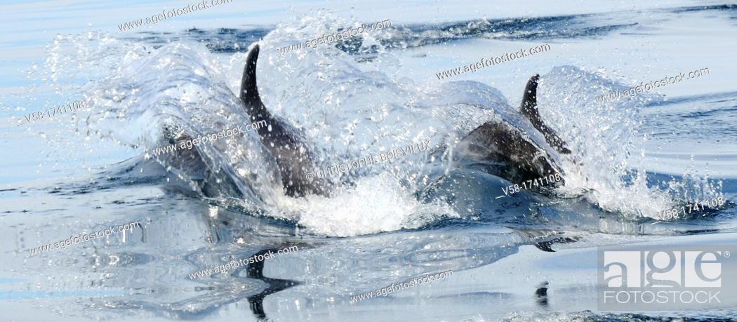 Stock Photo: Mexico, Baja California, Bottlenose dolphins Tursiops.